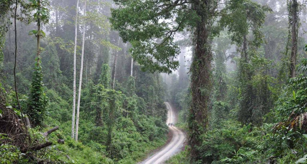 3  Days 2 Nights Danum Valley Rainforest