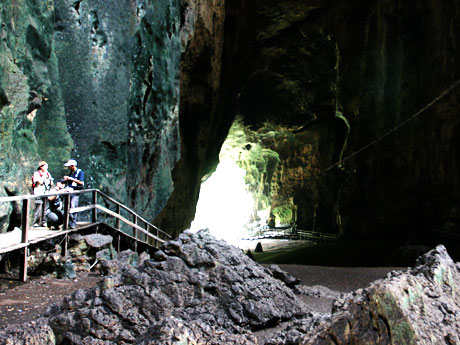 5 Days 4 Nights Gomantong Caves/Bilit/ Selingan Turtle Island/Sepilok Orang Utan/City Tour/Sabah Hotel