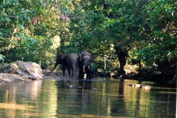 2 Days 1 Night Tabin Wildlife Safari